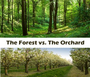 forest vs orchard